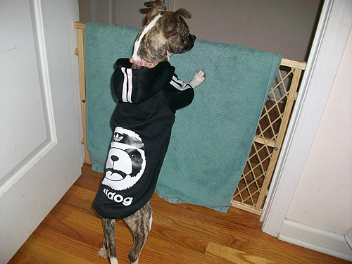 Rosey Standing Up in Adidog Hoodie